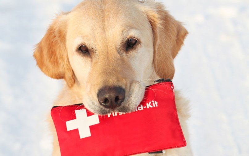 Amici a 4 zampe: help us create a Canine Rescue Unit for the Red Cross - Modena